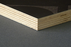 birch film face quality timber